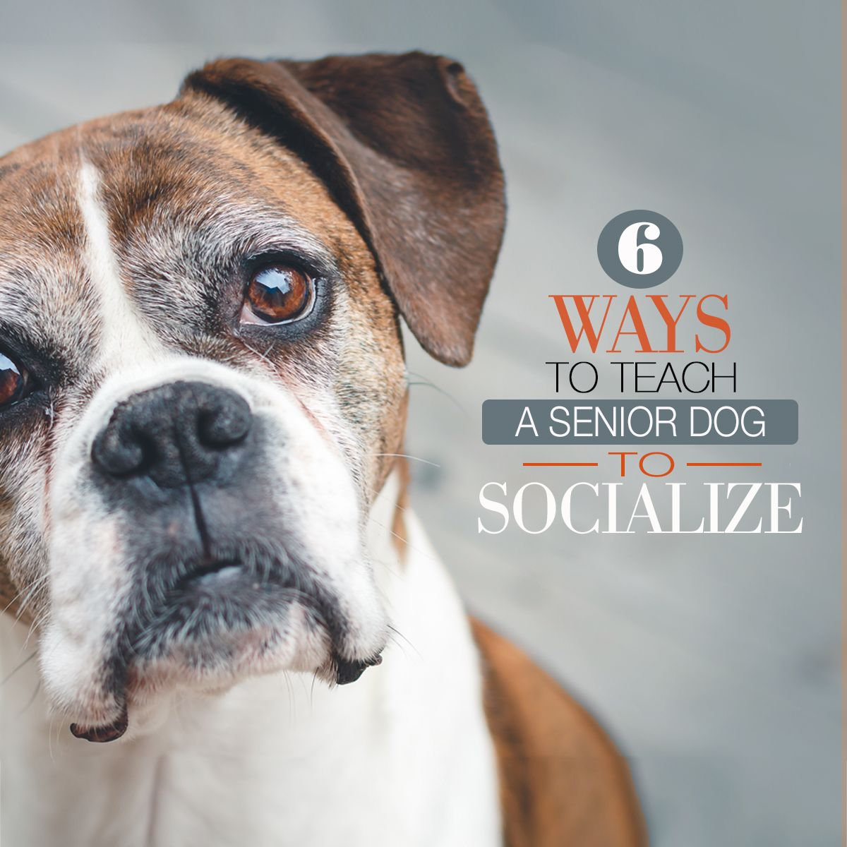 6 Ways To Teach A Senior Dog To Socialize compressor