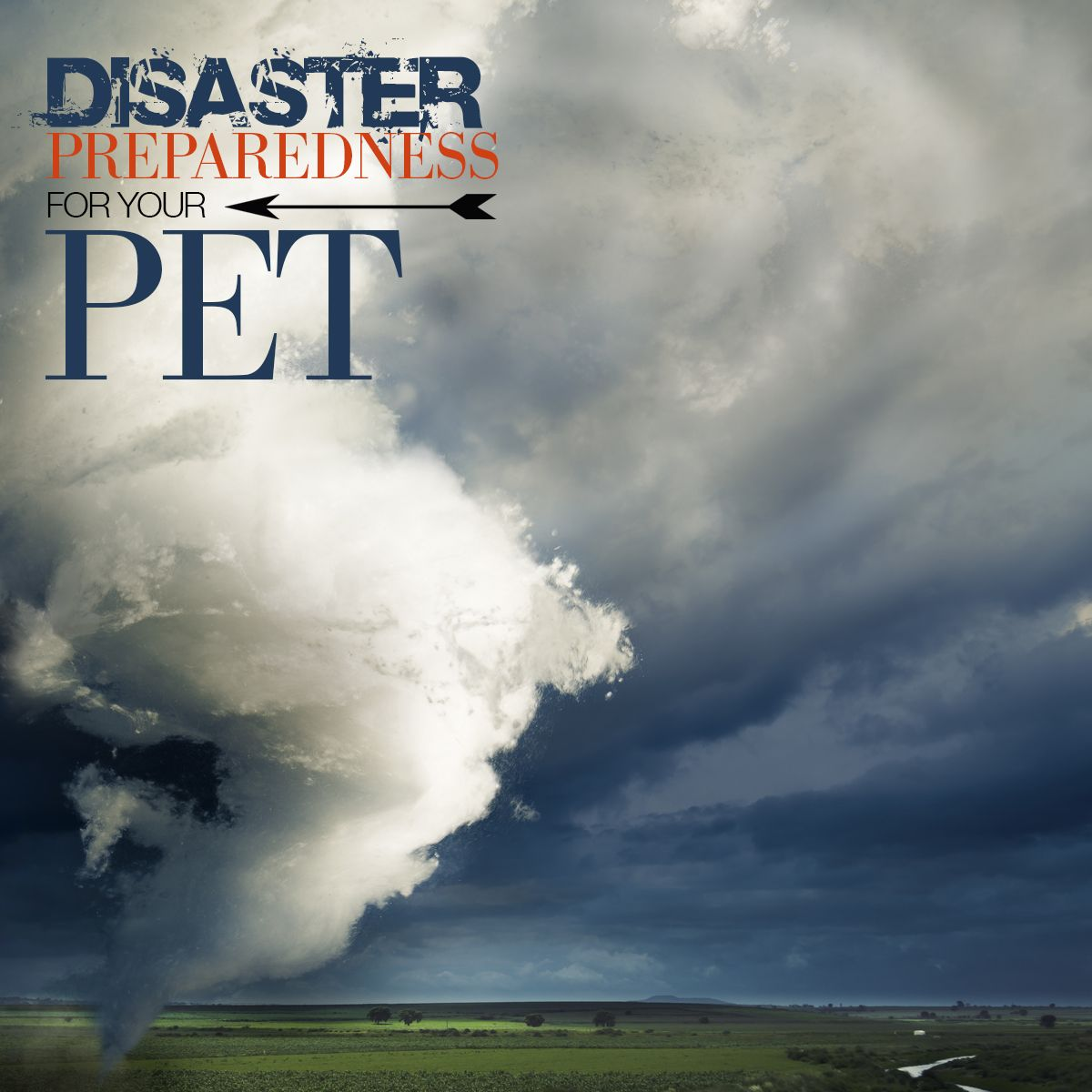 Disaster Preparedness For Your Pet compressor